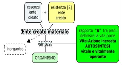 SanTommaso,ontologia4,Autosintesi